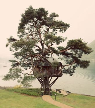 tree house The Lord provided prefect tree. Someone built a great tree house. Keep Pinning. Carol