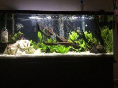 Fish_Tank (10)
