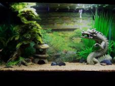 Fish_Tank (12)
