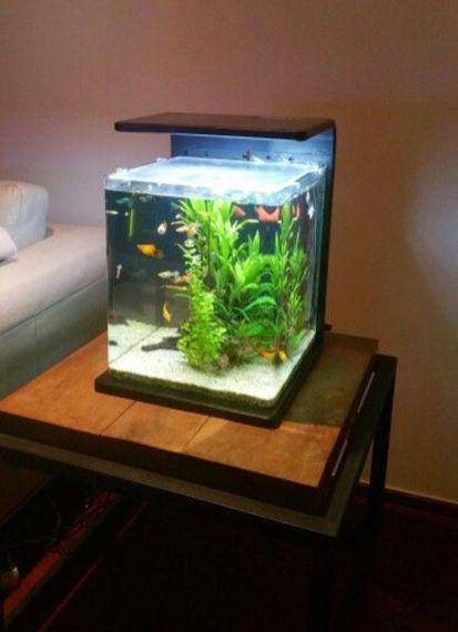 Fish_Tank (14)
