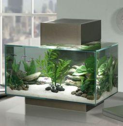 Fish_Tank (19)