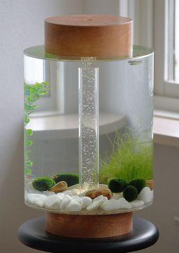Fish_Tank (24)
