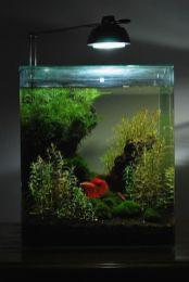 Fish_Tank (34)