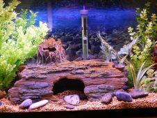 Fish_Tank (38)