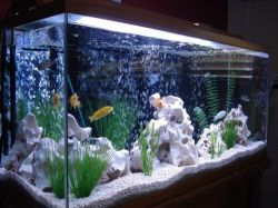 Fish_Tank (44)