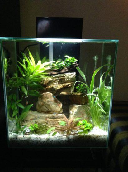 Fish_Tank (46)