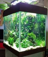 Fish_Tank (53)