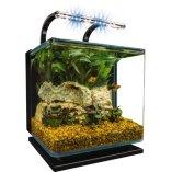 Fish_Tank (56)