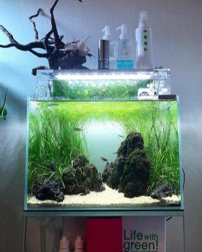 Fish_Tank (58)