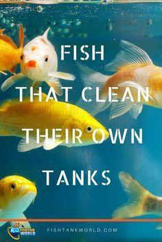 Fish_Tank (66)