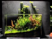 Fish_Tank (67)