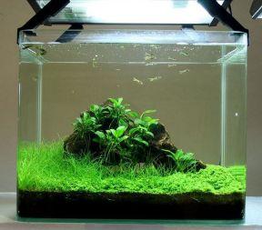 Fish_Tank (70)