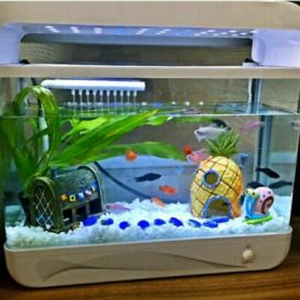 Fish_Tank (75)