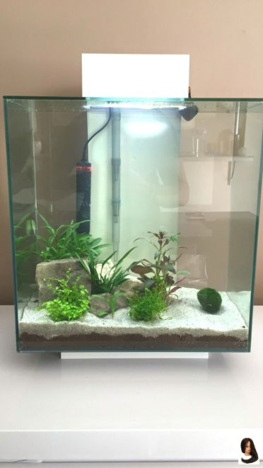 Fish_Tank (78)