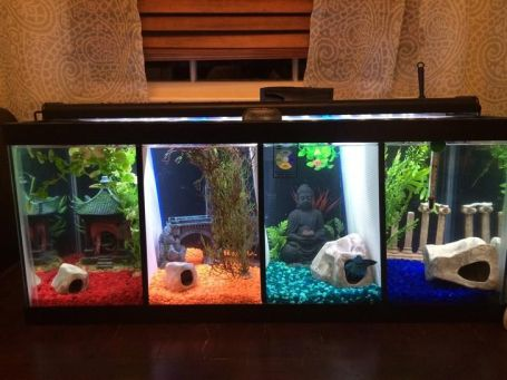Fish_Tank (83)