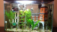 Fish_Tank (89)