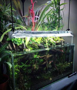 Fish_Tank (91)