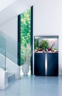a-minimalist-space-spruced-up-with-a-fish-tank-on-a-metal-stand-that-adds-decorative-value-to-the-nook