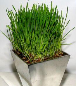 a-modern-concrete-planter-with-wheatgrass-is-a-fresh-and-cool-spring-decor-idea-that-you-can-easily-make