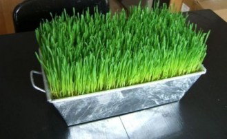 fresh-wheatgrass-decor-ideas-to-try-in-spring-11-554x341