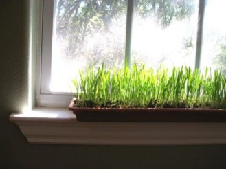 fresh-wheatgrass-decor-ideas-to-try-in-spring-27-554x415