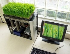 fresh-wheatgrass-decor-ideas-to-try-in-spring-29-554x432