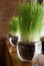 fresh-wheatgrass-decor-ideas-to-try-in-spring-7-554x830