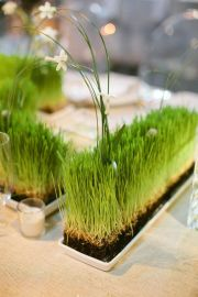 wheatgrass-in-trays-with-long-grasses-and-white-blooms-are-lovely-spring-decorations-that-are-living-and-fresh