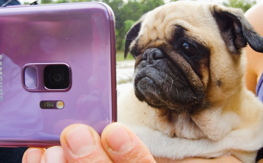BuzzFeed and The Dodo Help Make Every Day Epic in Super Slow-mo with the Samsung Galaxy S9 and S9+