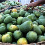 PRAN to procure 60,000 metric tons of mangoes