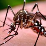 Editors for setting up research cell on dengue