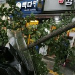Typhoon Lingling: North Korea on alert as storm threatens crops