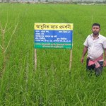 Boro cultivation going on in full swing in Khulna