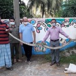 12-foot-long pyhthon rescued in Hathazari