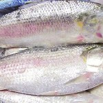 Bangladesh won't export Hilsa over next five years