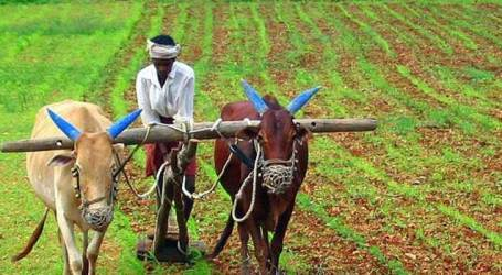 Afghanistan invites Indian businesses to invest in agri sector