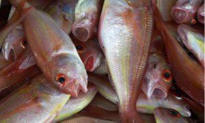 דגים - הפורום הישראלי לתזונה בת קיימא