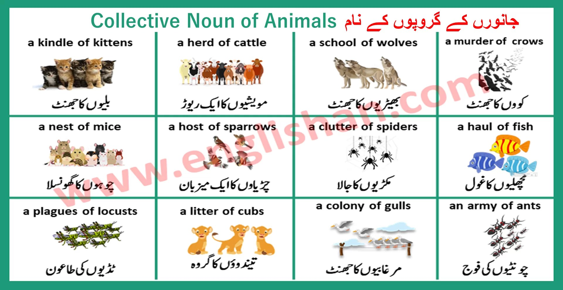 100 Examples Of Collective Nouns List Things Animals