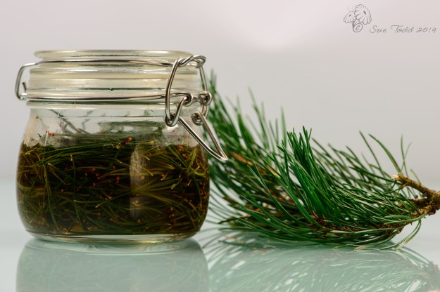 Pine Needle Vinegar © Sue Todd 2014