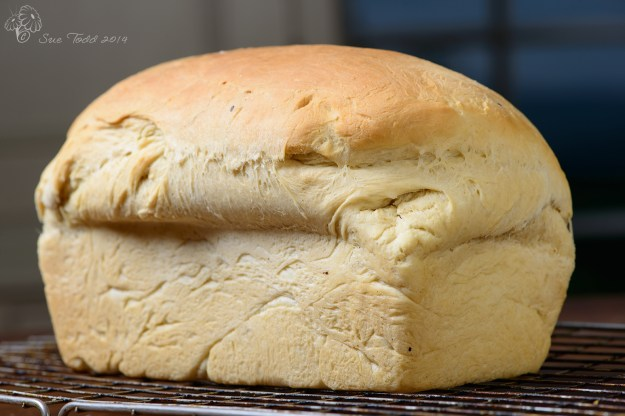 Everyday Bread - Gary's loaf from earlier this week © Sue Todd 2014