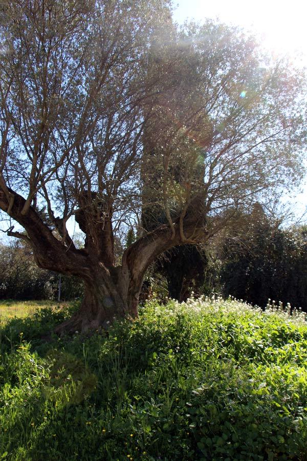 Un bel arbre dans le parc derrière les locaux de English For Life