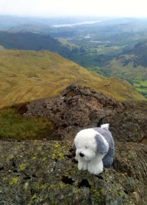 The book inspired me to get out on the fells. Sam the dog even ventured out for the walk