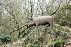 Wild Boar Woodland Walks