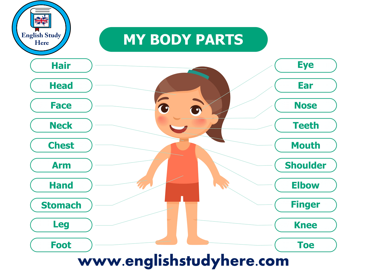 Arm Body Parts Names