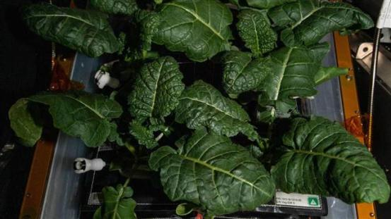 New strains of bacteria found on ISS can help grow plants in space: Tribune India