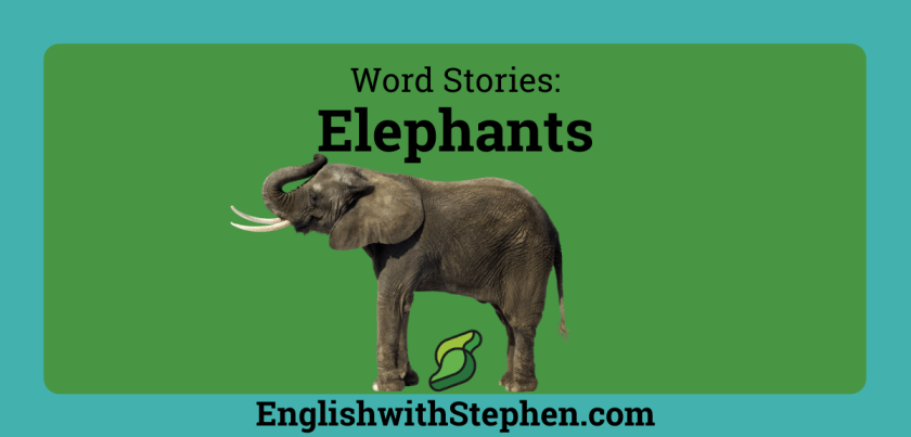 Two phrases associate with elephants, by English with Stephen