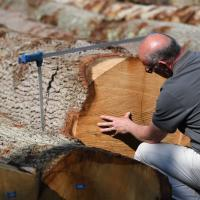 Tom checking colour in oak logs.englishwoodlandstimber.