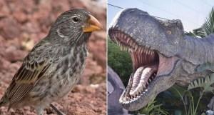 Neuvěřitelné: Malinký ptáček kouše třistakrát silněji než T.rex!