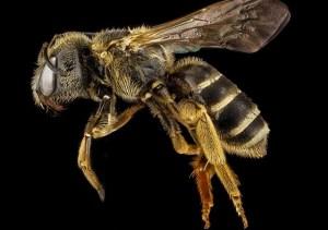 Tajemná příroda: Včely jsou prý schopné zvládnout základní matematické dovednosti
