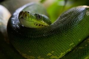 VIDEO: Had, který dokáže ležet na zádech. Proč?